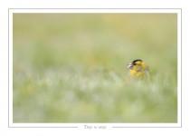 oiseau_-99