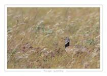 oiseau_104