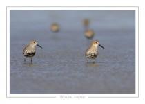 oiseau_108