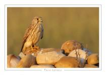 oiseau_109