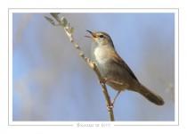 oiseau_110