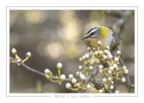oiseau_111
