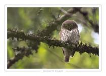 oiseau_112