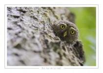 oiseau_113