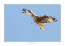 oiseau_114