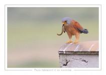 oiseau_116