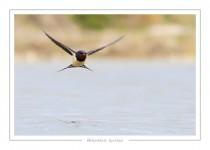 oiseau_117