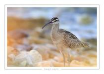 oiseau_118