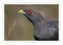 oiseau_120