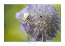 macro_faune_106-2