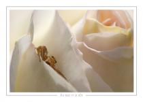 macro_faune_137-4