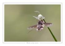 macro_faune_139-4