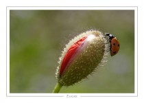 macro_faune_34-2