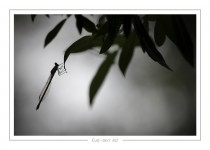 macro_faune_39-2