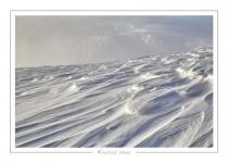 hiver40