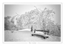 hiver_11
