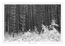 hiver_27