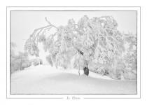 hiver_36