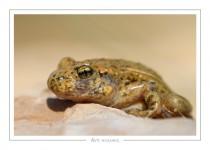 reptile_amphibien_-1