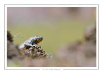 reptile_amphibien_-12