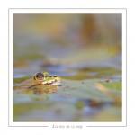 reptile_amphibien_-14