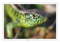 reptile_amphibien_-16