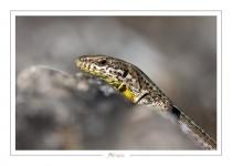 reptile_amphibien_-18
