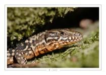 reptile_amphibien_-20