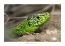 reptile_amphibien_-21