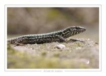 reptile_amphibien_-22