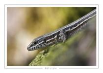 reptile_amphibien_-23
