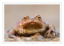 reptile_amphibien_-24