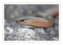reptile_amphibien_-25