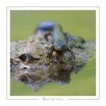reptile_amphibien_-27