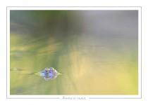 reptile_amphibien_-28