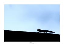 reptile_amphibien_-29