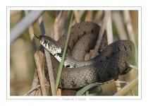 reptile_amphibien_-3