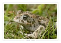 reptile_amphibien_-4