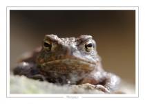 reptile_amphibien_-6