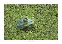 reptile_amphibien_-8