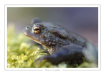 reptile_amphibien_31