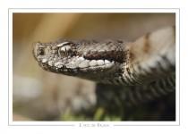 reptile_amphibien_32