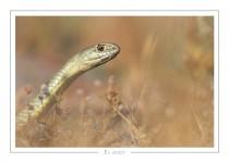 reptile_amphibien_33